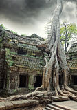 Temple of Ta Prohm in Angkor Wat royalty free stock photo