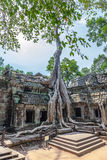 Temple of Ta Prohm in Cambodia Stock Image
