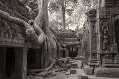 Temple of Ta Prohm in Siem Reap Stock Photography