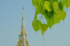 Temple. Thai temple, Wat Sothonwararam Worawihan Royalty Free Stock Image
