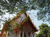 Temple at thailand and tree. The tree with old temple of Thailand Stock Photos