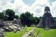 Temple of tikal. A view of the ruins of tikal in guatemala Stock Photography