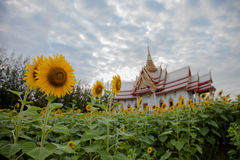Temple, toit, le soleil, oiseaux, beaux, pays, fleurs, jaunes Image libre de droits