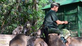 Temple Ubud, Bali, Indonésie de singe banque de vidéos