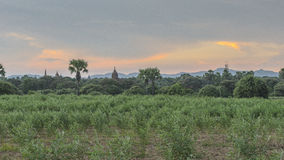 The Temples of Bagan Royalty Free Stock Photography