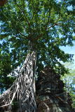 Temples Of Cambodia in the trees. Cambodia temples on a stunning bluebird day Stock Photography