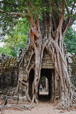Temples d'Angkor Vat, Cambodge Photo libre de droits