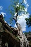 Temples du Cambodge dans les arbres Images libres de droits
