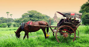 The temples and the horse carriage in Bagan Stock Images