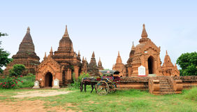 The temples and the horse carriage in Bagan Stock Photography