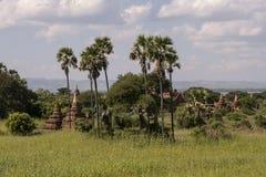 Temples and pagodas of Bagan. View of the archaeological park of the ancient temples and pagodas of Bagan. Myanmar stock photos