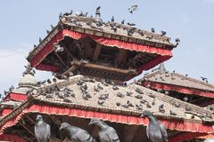 Temples with pigeons in Nepal royalty free stock images