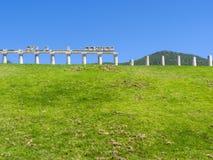 Templet fördärvar på forntida Messini, Messinia, Peloponnese, Grekland Royaltyfri Fotografi