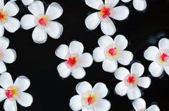 Templetree blommar på vatten Royaltyfri Fotografi