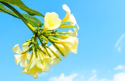 Templetree. Flower in royalty free stock photos