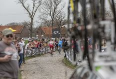 Group of Cyclists - Paris-Roubaix 2018. Templeuve, France - April 08, 2018: Rear view of a group of cyclists riding on the cobblestone road in Templeuve during Royalty Free Stock Photo