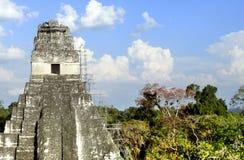 Templo 1 de Tikal Imagen de archivo