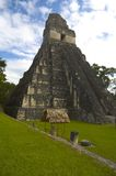 Templo 1 tikal Imagens de Stock Royalty Free
