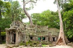 Templo Angkor do cavaleiro do túmulo de Ta Prohm Imagem de Stock