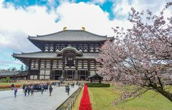 Templo budista Todai-ji con la flor de la cereza imagen de archivo