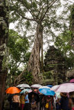 Templo Cambodia de Tah Prohm Fotos de Stock