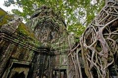 Templo Camboja Siem Reap de Ta Prohm imagens de stock