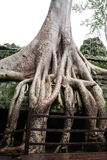Templo coberto de vegetação antigo Imagem de Stock