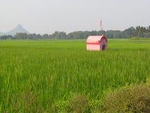 Templo cor-de-rosa pequeno só da casa em campos verdes imagem de stock