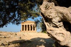 Templo dórico de Concordia con el olivo Fotos de archivo
