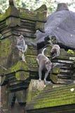Templo da floresta do macaco do Balinese imagens de stock