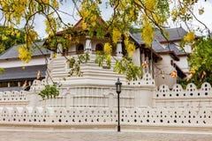 Templo da relíquia sagrado do dente e das flores amarelas imagem de stock royalty free