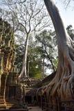 Templo de Angkor Wat, Siem Reap, Camboya fotos de archivo
