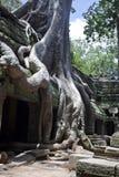 Templo de Angkor Wat Ta Prohm Fotografia de Stock Royalty Free