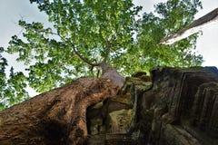 Templo de Camboja Foto de Stock
