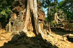 Templo de Camboya de TA Prohm en Angkor Wat Fotos de archivo libres de regalías