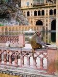 Templo de Galta Ji Mandir, la India imagenes de archivo