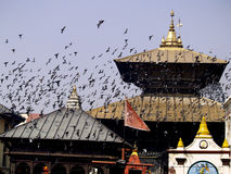 Templo de Pashupatinath fotografia de stock