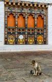 Templo de Punakha Dzong (Pungthang Dechen Phodrang Dzong - palácio da grande felicidade), Butão Fotos de Stock Royalty Free