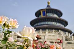 Templo de Rosa e de asiático Fotografia de Stock