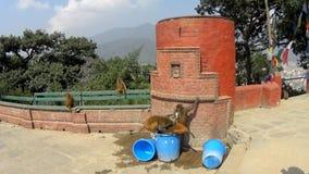 Templo de Swoyambhunath en Katmandu almacen de video