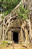 Templo de TA Prohm Foto de archivo libre de regalías