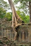 Templo de Ta Prohm fotografia de stock royalty free