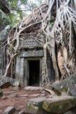 Templo de Ta Prohm Imagem de Stock