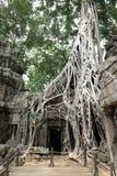 Templo de TA Prohm Foto de archivo