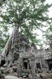 Templo de TA Prohm Fotos de archivo libres de regalías