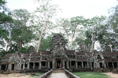 Templo de Ta Prohm Fotografia de Stock
