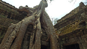 Templo de Ta Prohm Imagens de Stock Royalty Free