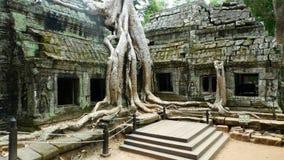 Templo de TA Prohm, Angkor, Camboya Imagenes de archivo