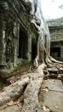 Templo de TA Prohm, Angkor, Camboya Fotos de archivo