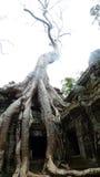 Templo de TA Prohm, Angkor, Camboya Imágenes de archivo libres de regalías